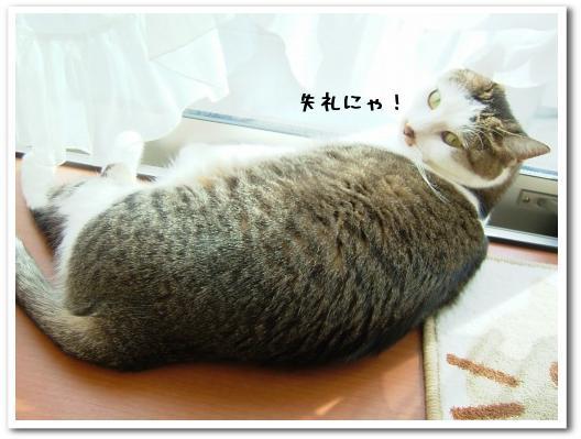 azarashikomi20081126.jpg