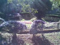 チリーフラミンゴ