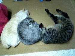 猫三兄弟81126