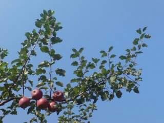 20091027 収穫の秋