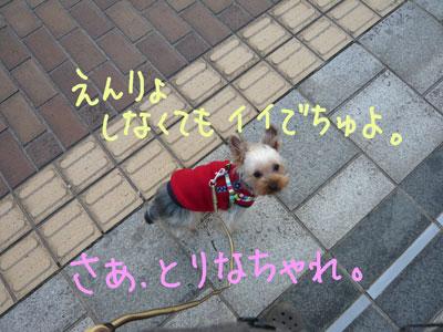 P1030365.jpg