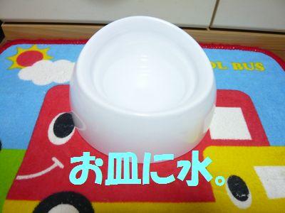 P1040732.jpg