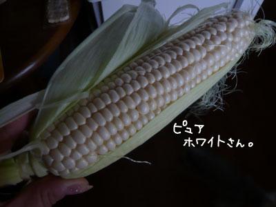 P1060165.jpg