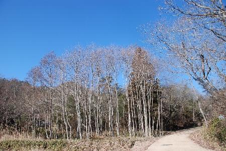 2010・01・24西谷公園4