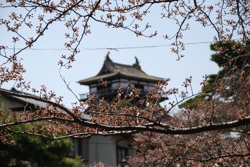 2010・04・04丸岡城1
