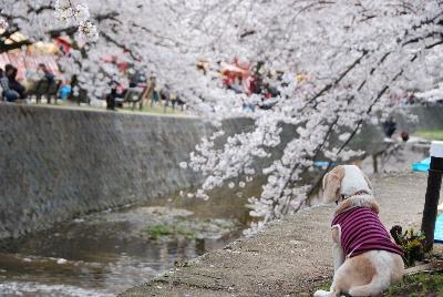 2009・04・05花より団子