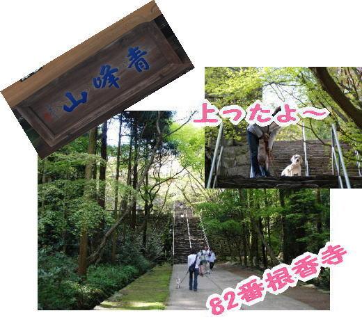 2010・04・2482番 根香寺1