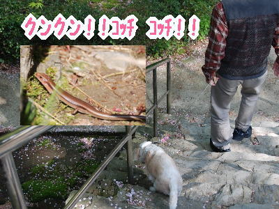 2010・04・2482番 根香寺2