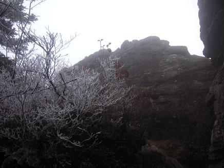 登りかえすも雪