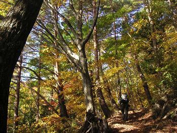 秋の気配漂う森だね