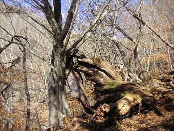 オブジェっぽい木