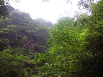 なるほろ~~の森林浴。