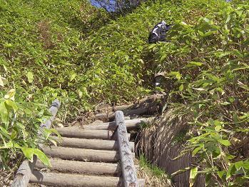 笹っ原の中に階段