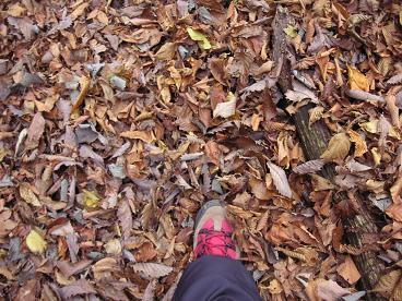 落ち葉いっぱい