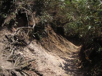 掘れてスリ鉢みたいな登山道