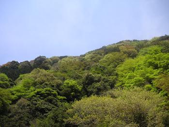 カズラ谷を見上げる