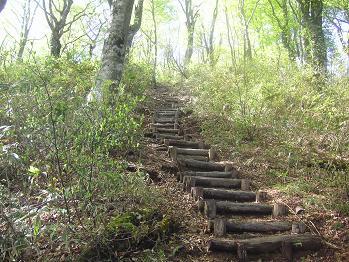 根っこが終わると階段