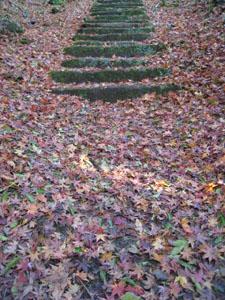 もみじの階段