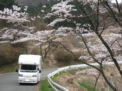 高森千本桜1