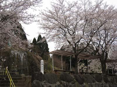 百本桜と滝