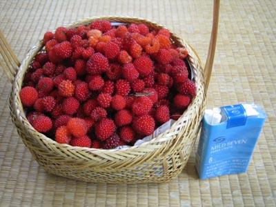 木苺の収穫