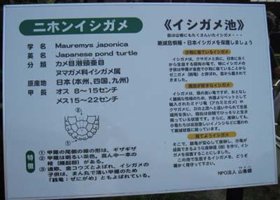 イシガメ池説明