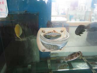 伊方の魚 3