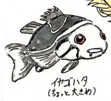 イヤゴハタ ちょっと大きな幼魚