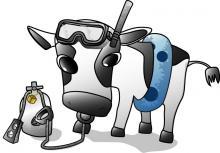 ダイビングが趣味の牛