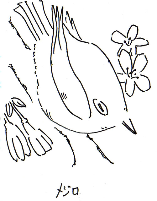 20090303_メジロと桜_モノクロ