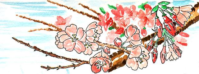 20090305_富戸駅の桜