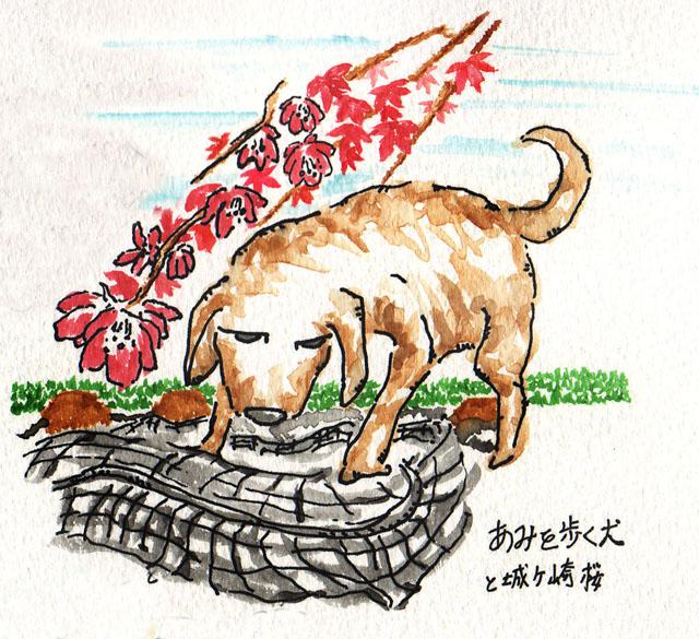 2009_29_網を歩く犬と城ヶ崎桜