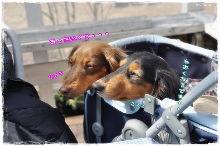 2011 03 06_7672