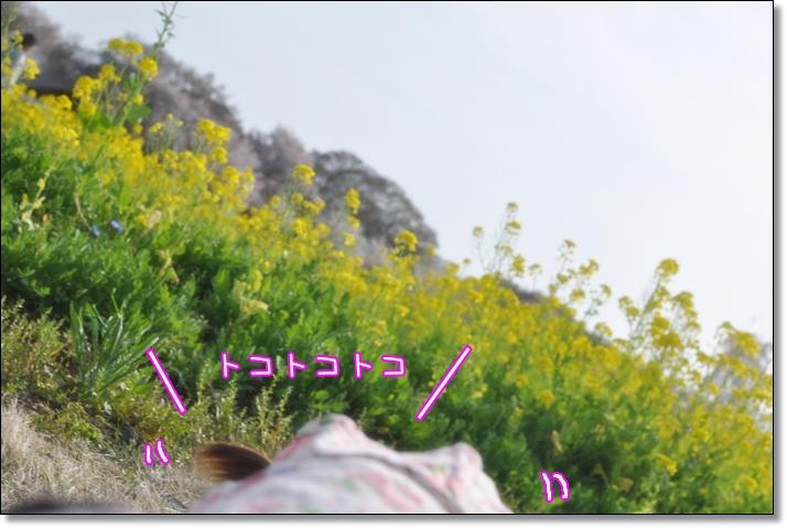 2011 04 10_0227