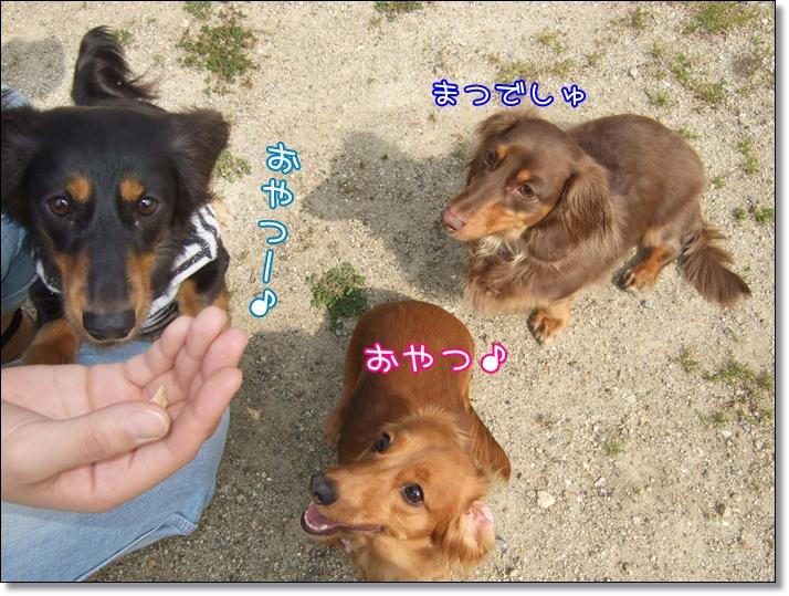 2011 04 17_0852