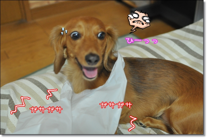 2011 07 17_8950