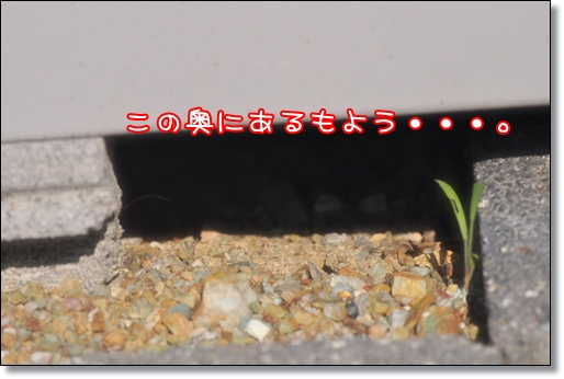 2011 07 17_9570