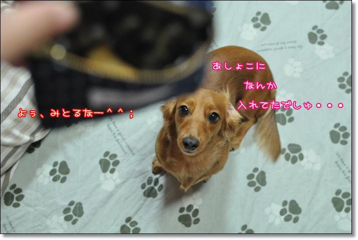DSC_0069_20110822213316.jpg