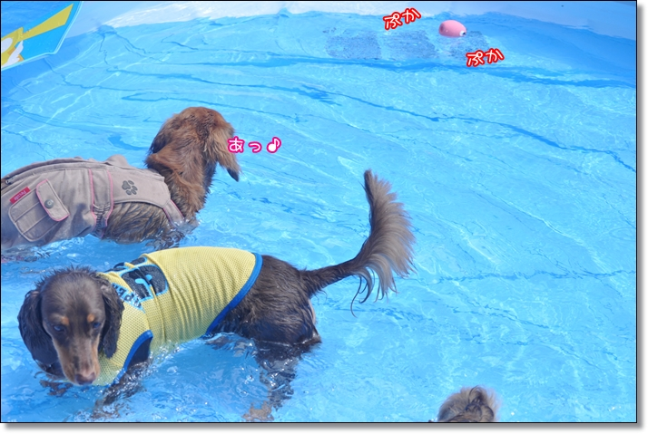 DSC_0388_20110901071759.jpg