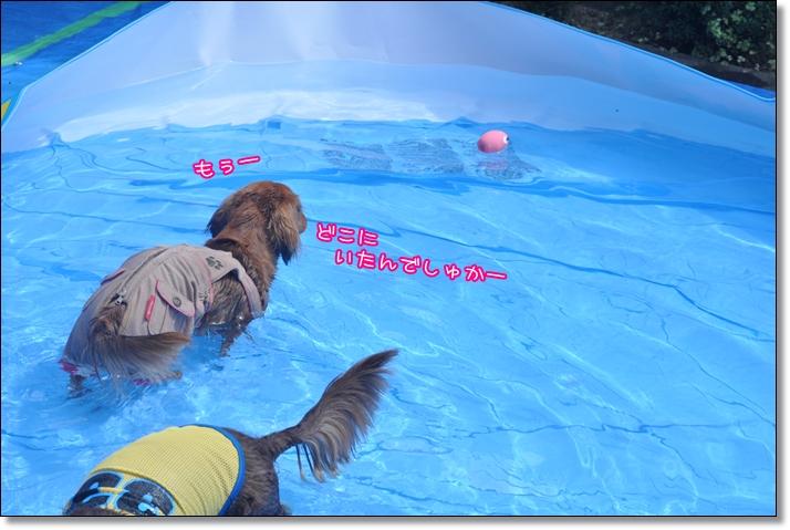 DSC_0389_20110901071759.jpg