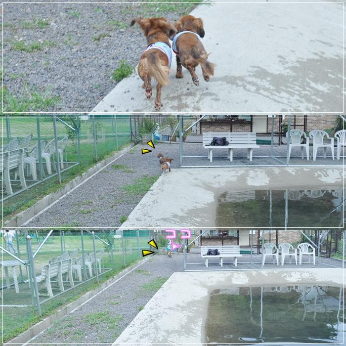 cats_20110710152715.jpg