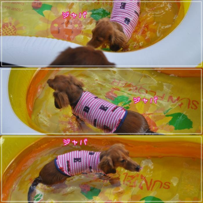 cats_20110719070029.jpg
