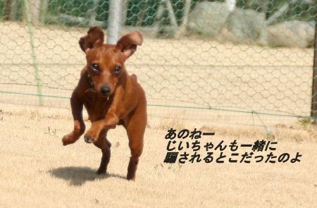 momiji-5-92.jpg