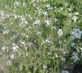大根の花なんですが実に可憐な花とは思ういませんか