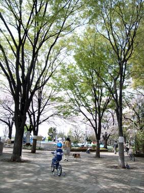 0845目黒花見散歩西郷山