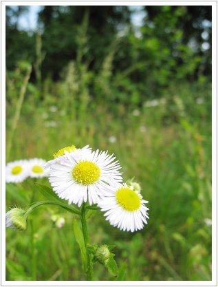 かわいい花♪