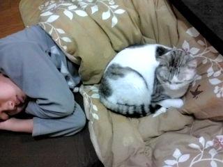 こたつでうたた寝
