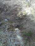 普通は鯉とか居るのだけど…やっぱり居なくなってた。金色鯉今年も見れなかった。in八溝渓谷