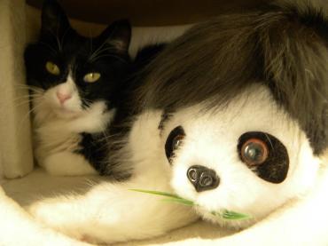 くり子とパンダ2