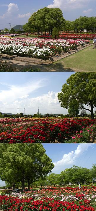 20100603-3.jpg